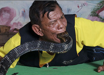 Snake fight: villagers in Thailand stage battles with king cobras thumbnail