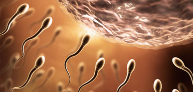 No men OR women needed: artificial sperm and eggs created for first time thumbnail